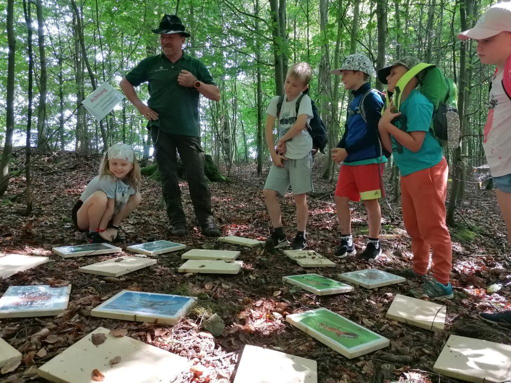 Eine weitere Aktion in dieser Woche war ein Ausflug mit Herr Köhler vom Sachsenforst. Er zeigte uns auf einer schönen Wanderung durchs Wagenbachtal die Artenvielfalt unseres Waldes.