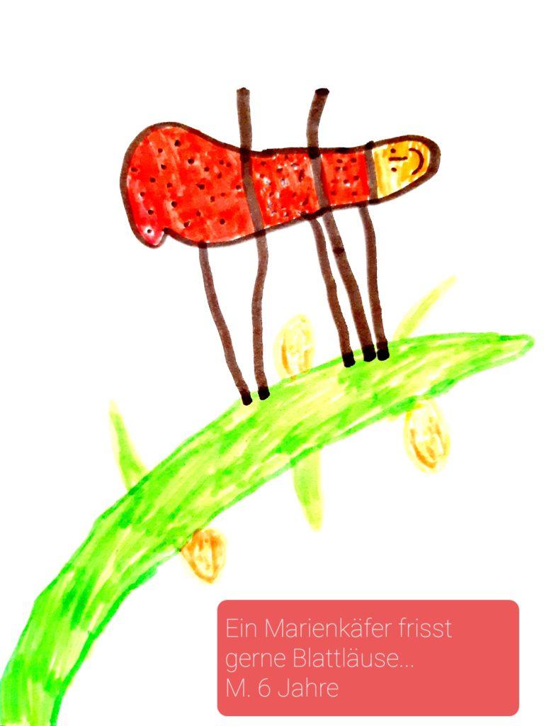 Ein Maikäfer frisst gerne Blattläuse ... von M. 6 Jahre